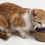 recette maison pour chat