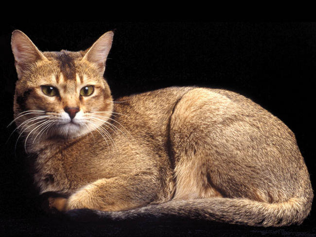chat ceylan