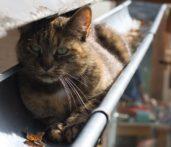 chat de gouttiere